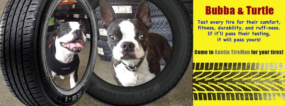 Meet Bubba & Turtle Shop Dogs